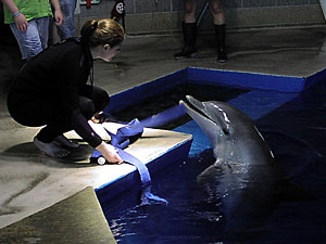 A trainer introduces one of the dolphins to guests as part of the Minnesota Zoo's Dolphin Encounter program.