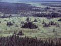 Redlake peatland