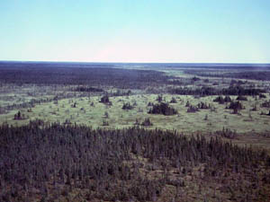 Peatland near Redlake, Minn. Peatlands cover fully one tenth of Minnesota, 8000 square miles. What if the world's peat deposits were to dry out from global warming and catch fire?