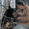 Ben Kilham plays with a young black bear cub