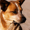 Are dogs learning ethics from humans?