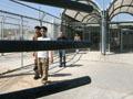 Palestinian teenagers released from Israeli jails