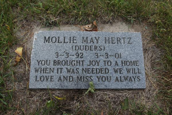 The Memorial Pet Cemetery in Roseville, Minnesota, was established in the early 1920s. Today it's the final resting grounds for thousands of animals -- from cats and dogs to guinea pigs and a hedgehog.