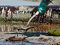 Shoveling oil sludge