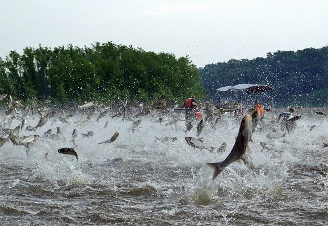 Asian carp danger bist geil