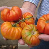 Heirloom tomatoes from Robert Coughlin's garden.