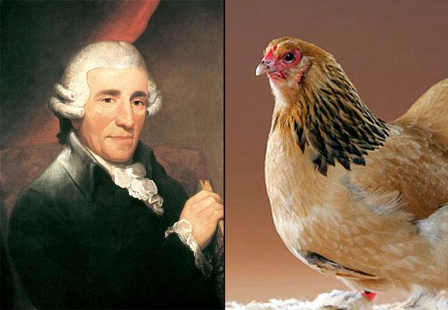 "Haydn: :""Hen"" Symphony (Images courtesy Wikimedia commons)"