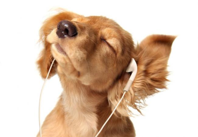 Pets and music: one degree of separation? | Classical MPR Relaxing Muziek