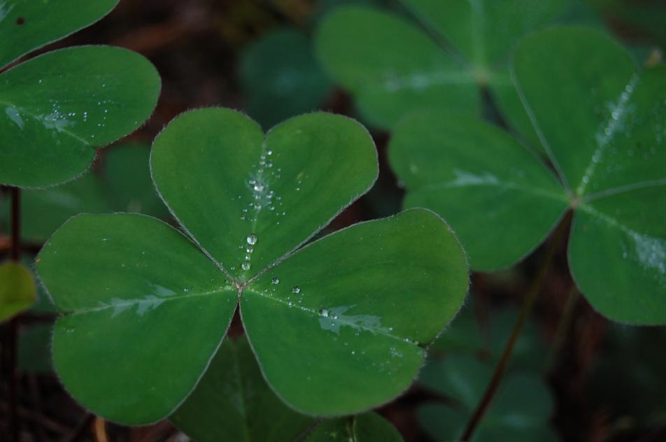 We're celebrating St. Patrick's day with the luck of the Irish. Today's 9:30 Coffee Break theme is songs about luck or being lucky.