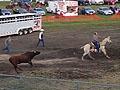 Bull escapes
