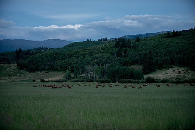 Watching an elk migration in Snowmass, Colo.