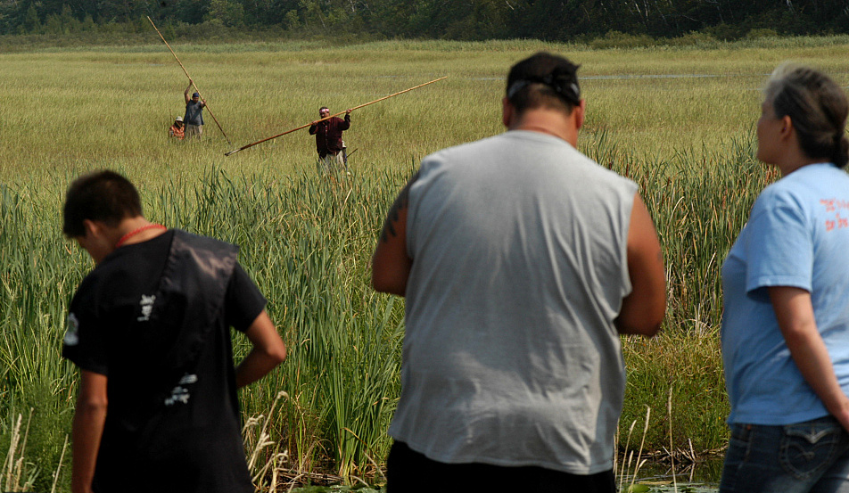 Ojibwe protesters harvest wild rice at Hole-in-the-Day Lake near Nisswa. The protesters were members of the 1855 Treaty Authority group, which advocates for tribe members' hunting, fishing and gathering rights under the treaty. Vickie Kettlewell for MPR News