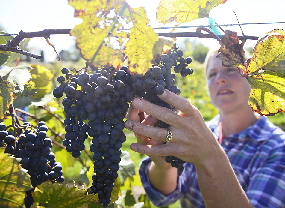 how to become a vineyard manager