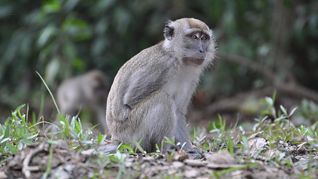 9:30 Coffee Break: Year of the Monkey