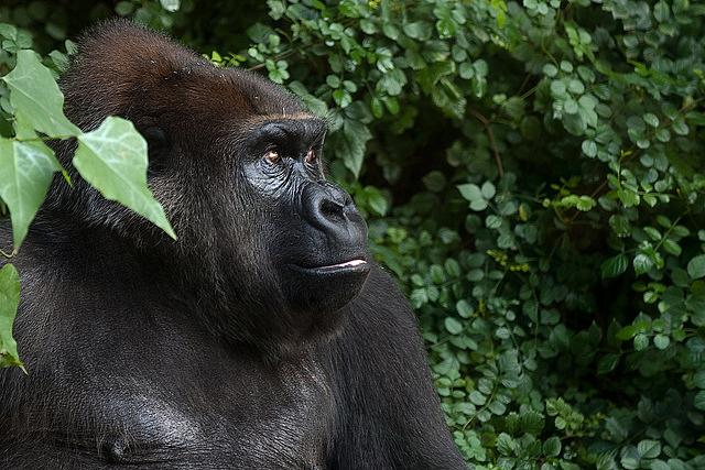 Coffee Break: Zoo animals